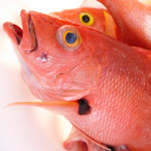 abaco-fishing