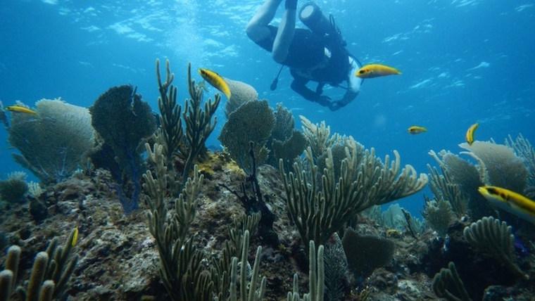 Abaco Bahamas diving