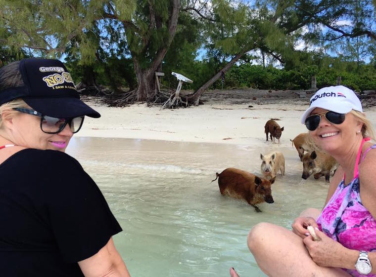 Bahamas Swimming Pigs of Abaco