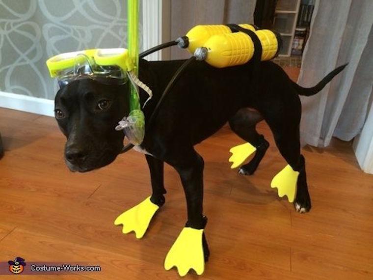 Scuba dog Halloween costume & Island Themed Halloween Costumes